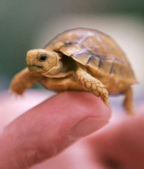 Baby - Cute turtle pics ...